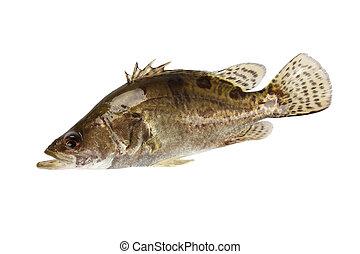 мандарин, рыба