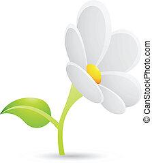 маргаритка, белый, цветок, значок