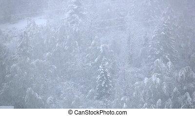 медленный, зима, снежно, pines, снегопад, движение, лес