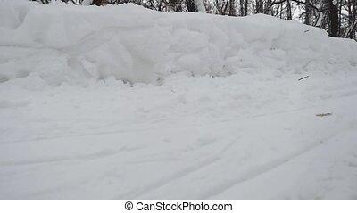 медленный, зима, motion., снегопад, лес, путь