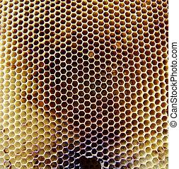 мед, фото