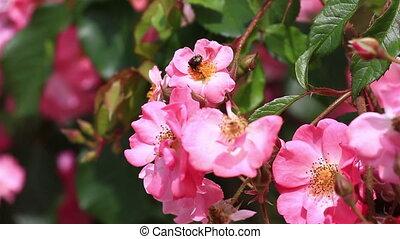мед, collecting, пыльца, пчела