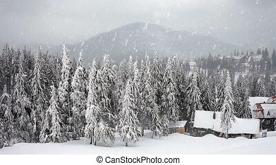 метель, tre, зима, ель, снег, буря