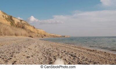 милый, медленный, пушистый, вверх, утро, движение, придерживаться, закрыть, белый, посмотреть, пляж, playing, shiba-inu