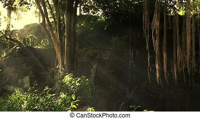 мистический, лес, пейзаж