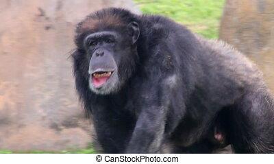 монтаж, примат