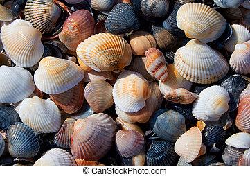 морской, тема, задний план, with, seashells, над, песок, крупный план