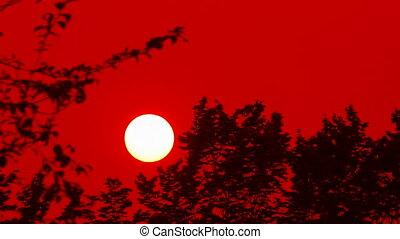 над, закат солнца, лес, красный