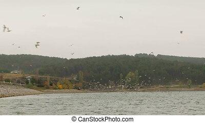 над, озеро, стадо, birds, летающий