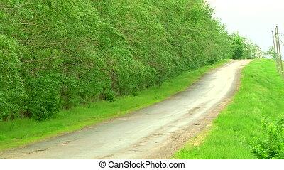 направления, автомобиль, лес, дорога
