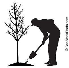 насаждение, дерево