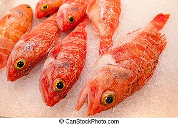 насест, рыба, лед, океан