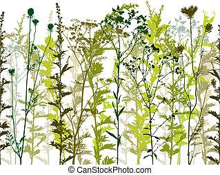 натуральный, дикий, plants, and, weeds.