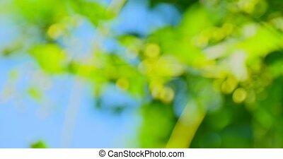 натуральный, зеленый, задний план