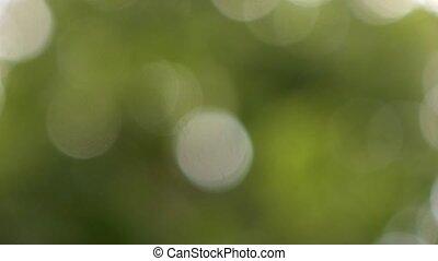 натуральный, bokeh, зеленый, задний план
