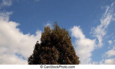 небо, дерево, clouds