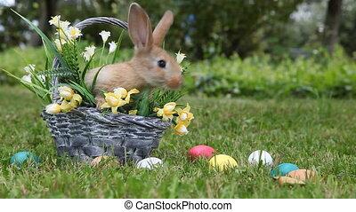 немного, кролик, сидящий, в, , корзина