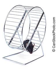 немного, мышь, на, упражнение, колесо