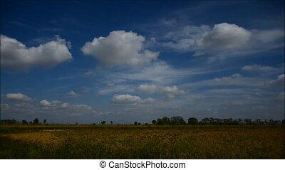 нива, день, облачный