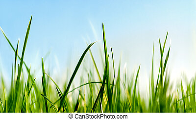 ниже, трава