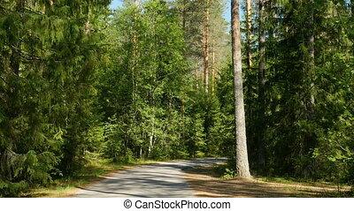 обмотка, лес, дорога