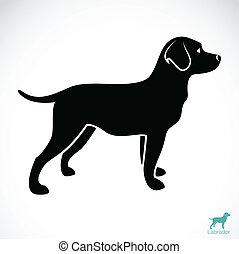 образ, вектор, лабрадор, собака