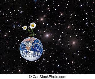 образ, elements, nasa, earth., меблированный, цветок, это