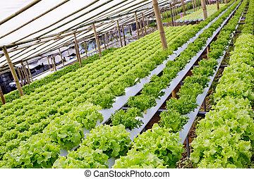 овощной, выращивание, органический, гидропонный, farm.