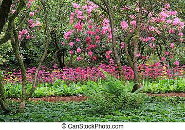 оглушающий, рододендрон, цветение, полный, примула, сад, ...