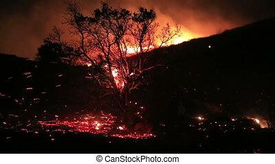 огонь, лес, ночь