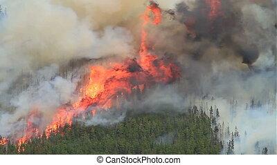 огонь, 10, лес