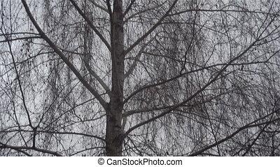 одинокий, бахрома, таинственность, дерево, темно, лес
