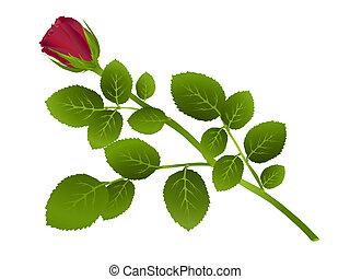 один, красный, роза