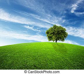 окружающая среда, зеленый