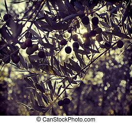 оливковый, дерево, филиал