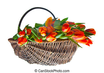оранжевый, tulips, корзина