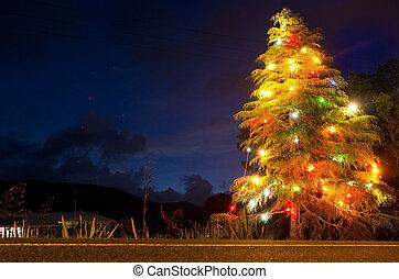освещенный, дерево, рождество, ночь
