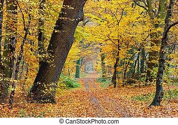 осень, в, парк