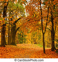 осень, долина