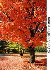 осень, красный