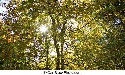осень, лес, солнечный лучик