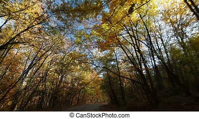 осень, лес, driving