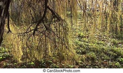 осень, лиственница, дерево, филиал