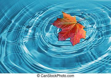 осень, лист, кленовый