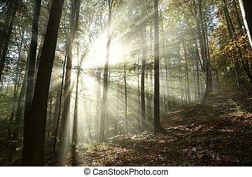 осень, туманный, лес