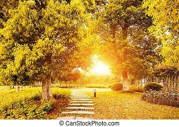 осень, colours, в, китай