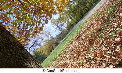 осень, dolly:, парк, кленовый, дерево