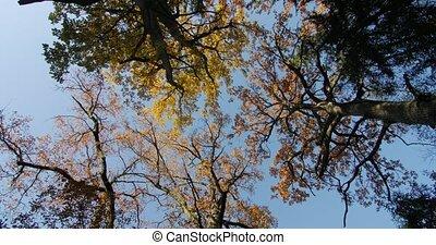 осень, treetops