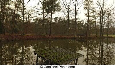 отражение, озеро, дерево