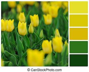 палитра, цвет, tulips, желтый, swatches, цветы